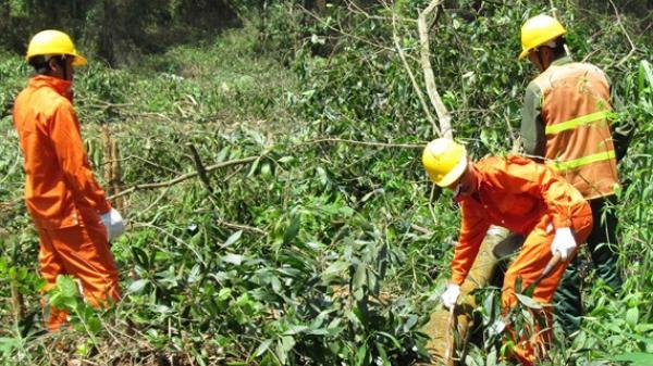 Quảng Trị: Diện tích đất có rừng phát triển hơn 3 lần