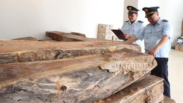 Quảng Trị: Giấu gỗ lậu dưới đá thạch cao