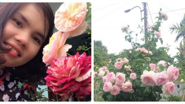 Lạc lối vào vườn hồng của cô giáo tiểu học ở Quảng Trị