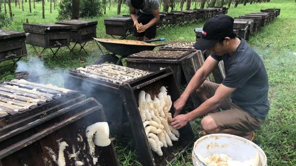 Quảng Trị: Làm giàu từ nuôi ong mật