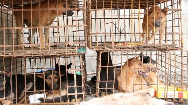 Cảnh sát hình sự vây bắt 2 đối tượng trộm chó tại đại lý thu mua