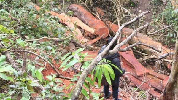 """Quảng Trị: Đề nghị khởi tố tội """"hủy hoại rừng"""" với 7 đối tượng phá rừng phòng hộ"""