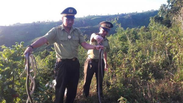 Quảng Trị: Nhóm đối tượng bỏ lại 150 con rắn bên đường rồi tháo chạy
