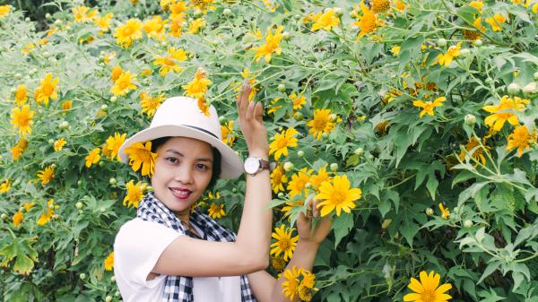 Về Quảng Trị mùa hoa dã quỳ