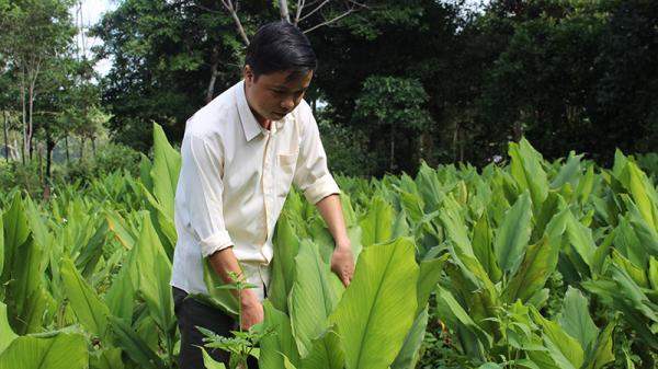 Chuyển đổi mô hình trồng cây nghệ theo phương pháp canh tác tự nhiên