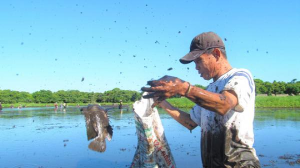 """Độc đáo lễ hội """"phá trằm"""" bắt cá, huyên náo cả vùng đầm nước"""