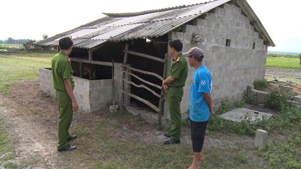 Người dân Quảng Trị cần cảnh giác với tội phạm tr ộm c ắp trâu bò