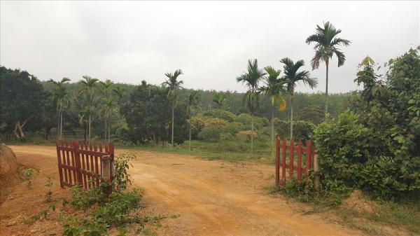 Quảng Trị: Giám đốc ch iếm đất rừng làm trang trại mẫu cho dân làm theo?