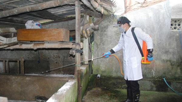 Phát hiện ổ dịch tả lợn Châu Phi đầu tiên ở huyện miền núi Quảng Trị