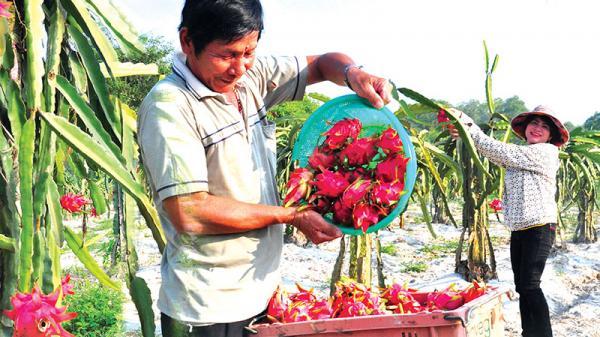 Nông dân Quảng Trị làm giàu trên quê hương mới
