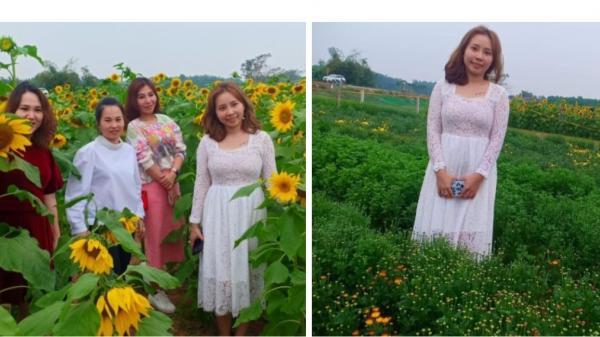 Quảng Trị: Hàng ngàn Du khách thích thú check-in với cánh đồng hoa Hướng Dương, Cúc Mai Vàng, Cúc Phi Lê đang nở rộ