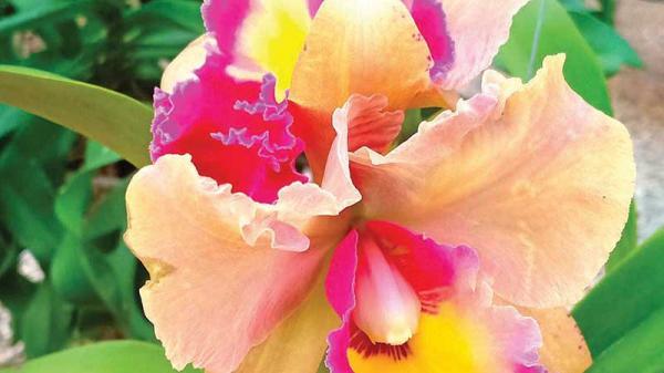 Thú chơi hoa ngày tết của người dân Quảng Trị