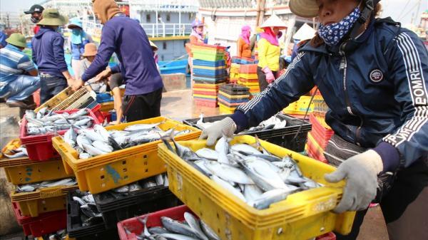 """""""Mở biển"""" đầu năm, ngư dân Quảng Trị phấn khởi vì đánh bắt được nhiều cá"""