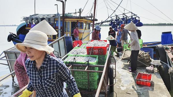 """Ngư dân Quảng Trị đón """"lộc biển"""" đầu năm"""