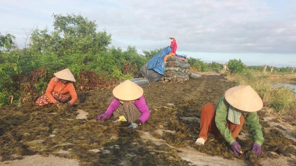 Rong câu ở Triệu Phước cho thu nhập hơn 250 triệu đồng/năm