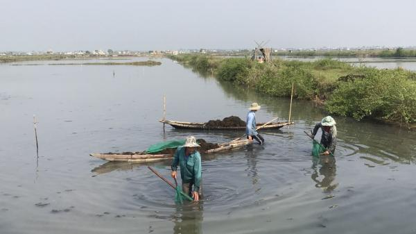Triệu Phong: Thu hoạch rong câu tự nhiên đem lại giá trị kinh tế cao