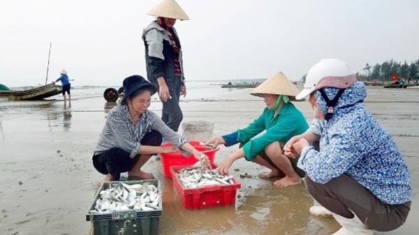 Ngư dân Quảng Trị thu nhập cao từ khai thác ruốc biển và cá trích