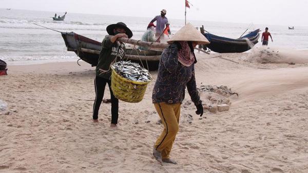 Ngư dân bãi ngang được mùa cá trích
