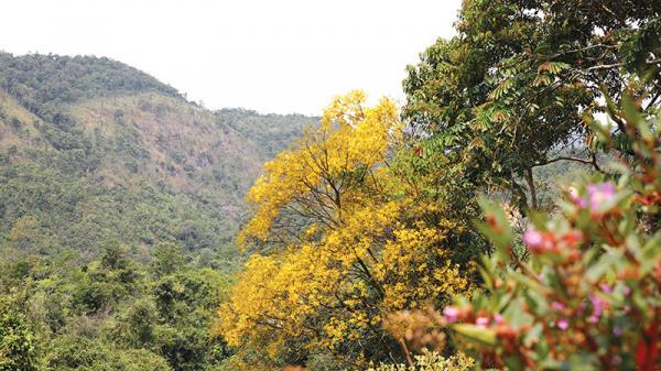Sa Mù, điểm hẹn với hoa rừng