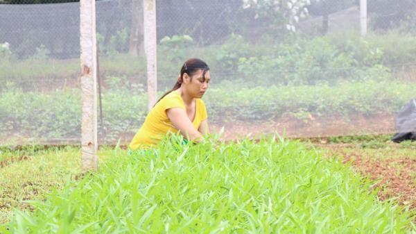 Những người nông dân làm giàu từ mảnh đất quê hương