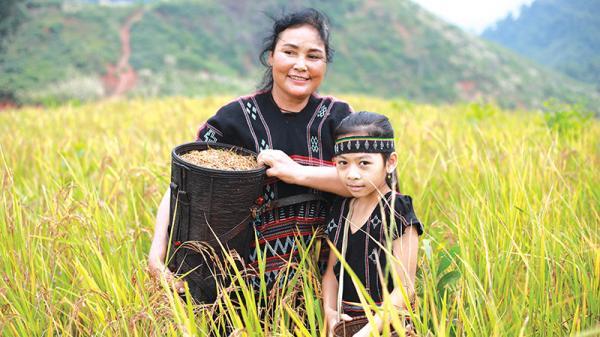 Cây lúa rẫy và lễ Ada của người Pa Kô