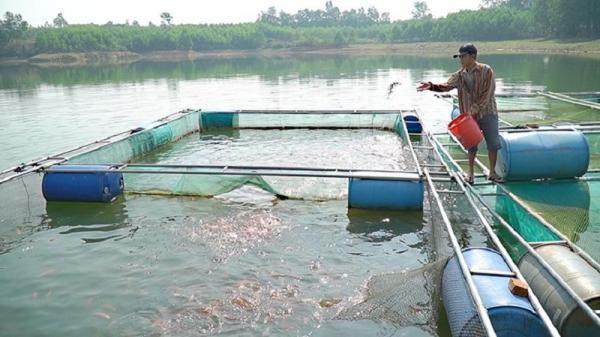 Cam Lộ: Hỗ trợ xây dựng mô hình nuôi cá chép giòn trong lồng