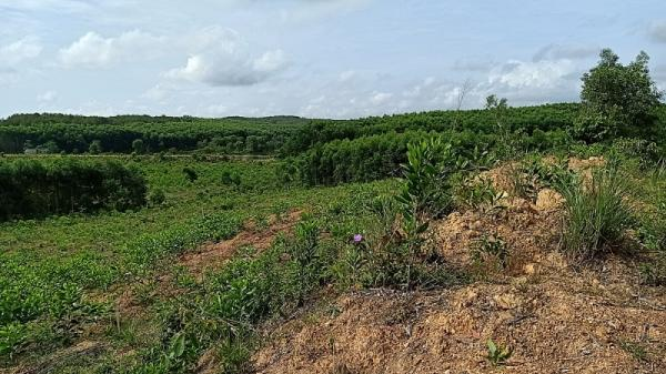Quảng Trị: Hàng trăm ha đất rừng thu hồi đang có nguy cơ bị lãng phí