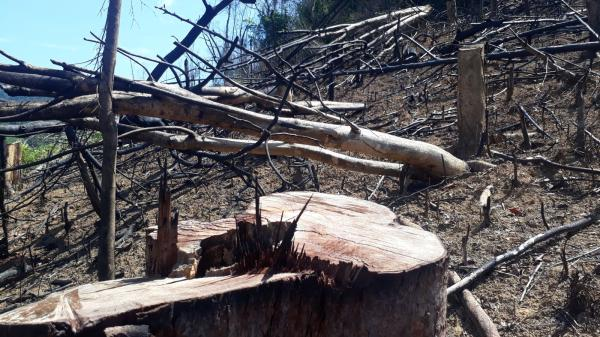 Thực trạng xâm hại rừng phòng hộ ở Vĩnh Linh