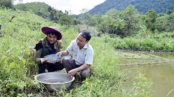 Triển khai mô hình nuôi cá nước ngọt ở Hướng Hóa