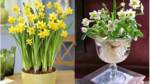 Những loài hoa cần tuyệt đối kiêng kị bày trên bàn thờ hoặc trong nhà ngày Tết Nguyên đán