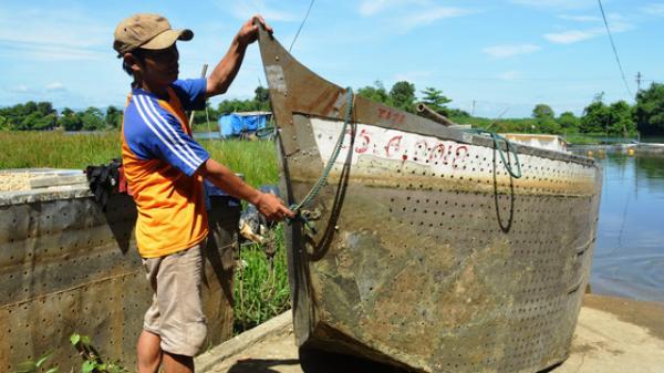 """Hiệu quả nuôi cá bằng """"lồng thuyền"""" ở Quảng Trị"""