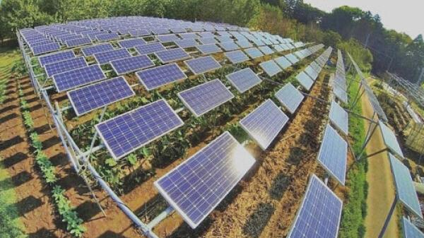 Quảng Trị sắp có dự án trang trại kết hợp điện mặt trời áp mái hơn 842 tỷ đồng