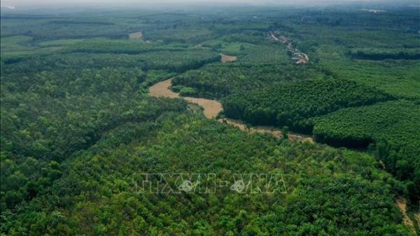 Quảng Trị: Lợi ích 'kép' từ giao đất, giao rừng cho người dân và cộng đồng
