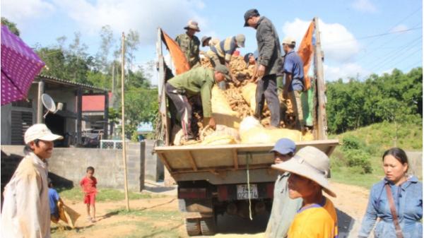 Quảng Trị: Nông dân thu nhập hơn 500 tỷ từ cây sắn, cao su, gỗ tràm