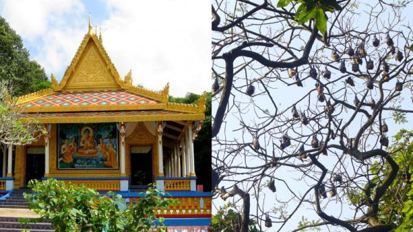 Khám phá chùa Dơi – địa điểm du lịch hấp dẫn tại Sóc Trăng