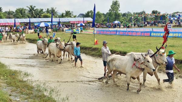 Đặc sắc Lễ hội đua bò Bảy Núi của người Khmer Nam Bộ