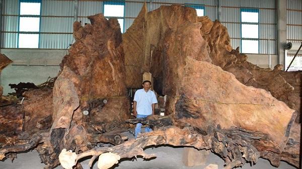 Gốc bàng cổ kỳ bí ở Sóc Trăng 600 năm tuổi giá 35 tỷ đồng chủ nhân cũng không bán