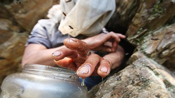 Nghề cheo leo vách đá lấy mật ong rừng ở Tây Bắc