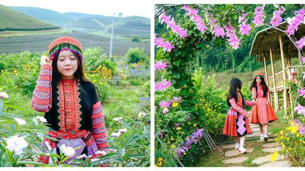 ĐẸP RỤNG TIM với thung lũng hoa NÚI ĐÁ TRẮNG có 1 – 0 – 2 ở Mộc Châu, hoa đang nở rộ đón khách dịp lễ 2/9