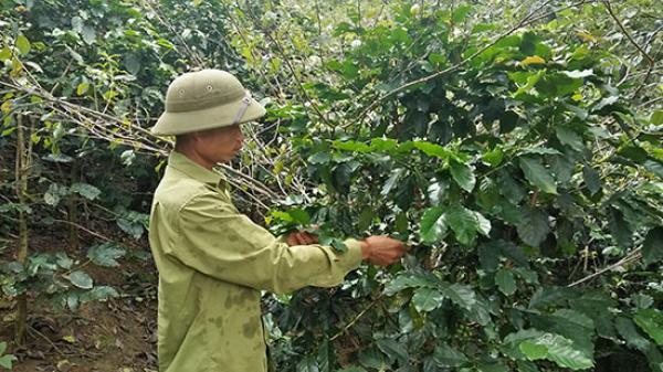 Chi bộ bản Pùa, Sơn La lãnh đạo nhân dân phát triển kinh tế