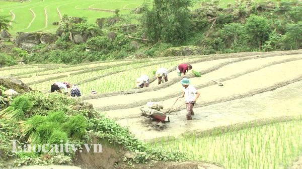 Vùng cao Lào Cai khẩn trương sản xuất vụ mùa