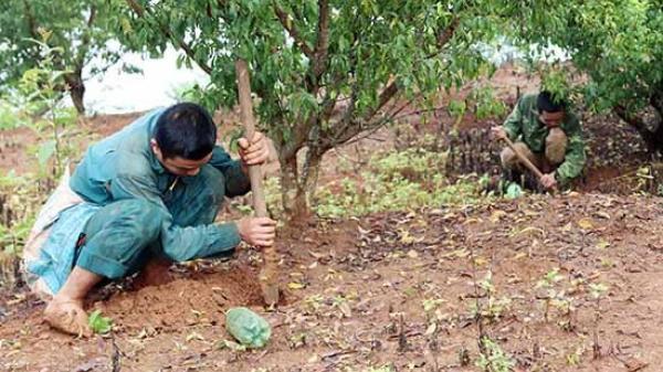 Nghề độc vùng Tây Bắc: Đào sản vật từ đất, lúc nhúc béo ngậy đốn tim du khách