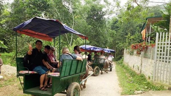 Xe trâu, vận tải du lịch độc đáo ở Bắc Hà - Lào Cai