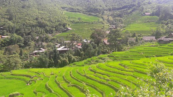 Xiêu lòng trước vẻ đẹp ruộng bậc thang Nậm Sài (Lào Cai)