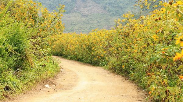 Khám phá những địa điểm ngắm hoa đẹp nhất Sơn La tháng 11
