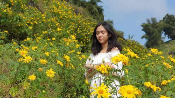 Lên Lai Châu s.ăn hoa Dã Quỳ bung nở vàng rực
