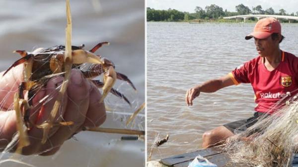 Tây Ninh: Mưu sinh mùa nước nổi