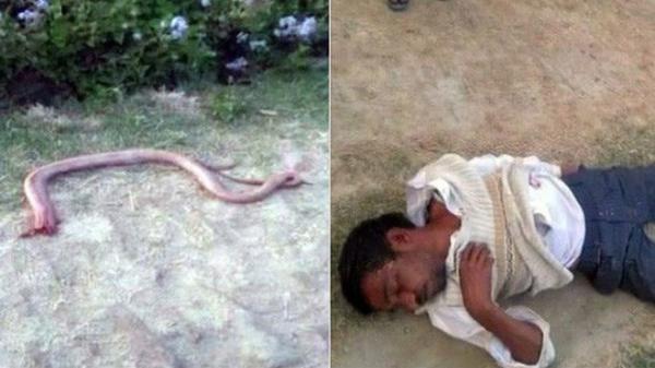 Ấn Độ: Bị rắn cắn, người đàn ông trả thù bằng cách nhai đầu rắn rồi nhận kết cục đau đớn