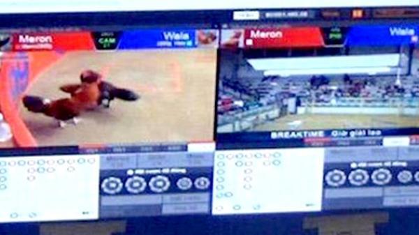 Tây Ninh: Bắt đối tượng tổ chức đánh bạc qua mạng