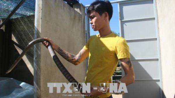Chàng trai Đồng Nai nuôi rắn ráo trâu cho thu nhập hàng tỷ đồng mỗi năm